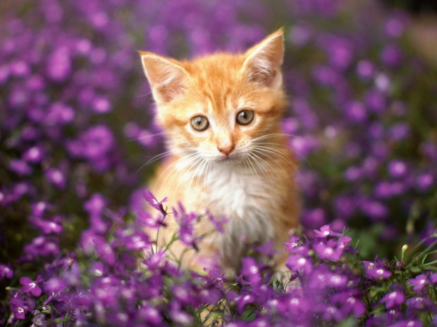 Image result for cat with flowers