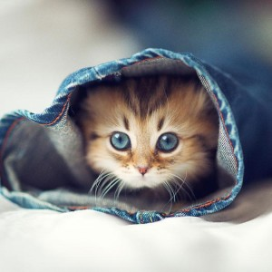 Cute Cat in Jeans