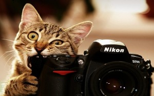 Funny Cat taking Pictures Camera