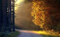 Trees and Sun Rays On Wide Road