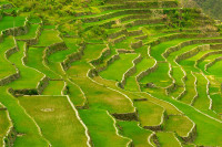 Rice Terraces of The Philippine Cordilleras, Philippines